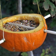 -Bird-Feeder pumkin