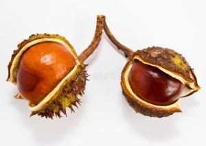 conkers4