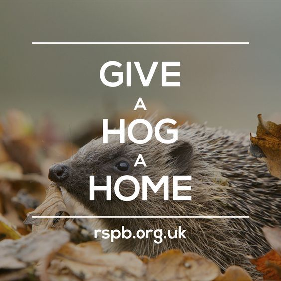 Build your very own cosy hedgehog home, and encourage them to rest, hibernate and raise their hoglets in safety_