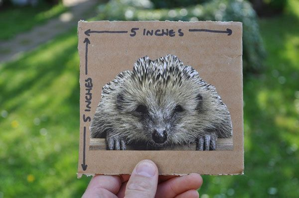 The perfect sized gap to let hedgehogs into your garden #homesfornature #RSPB