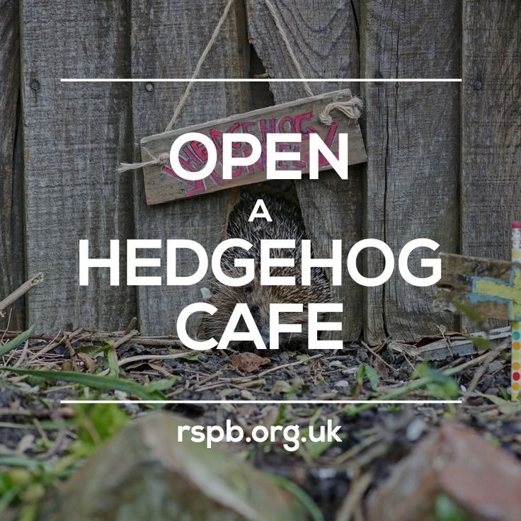 Tip of the week_ line your feeding station with newspaper and dry leaves and lay shallow dishes of hedgehog-friendly food and water inside the box! #homesfornature